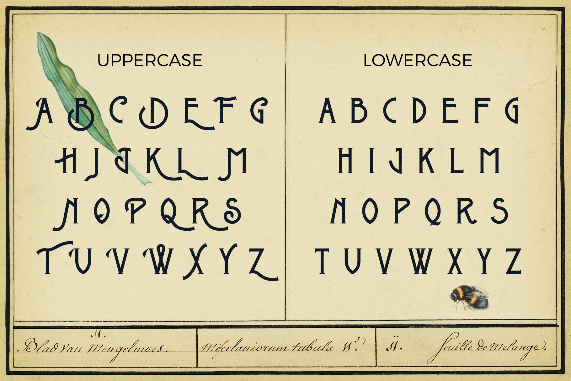 Metrobrew Vintage Font - 3 - preview V5 - 3